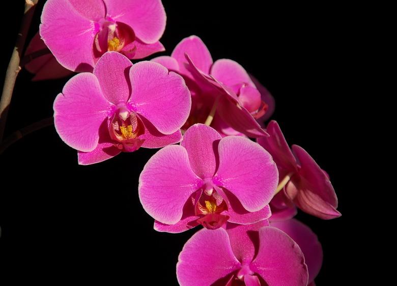 Как выглядит цветок орхидея фото