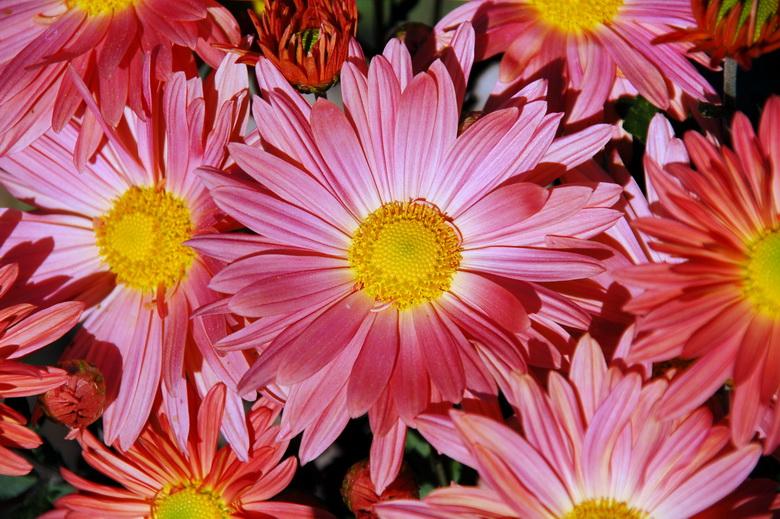 http://www.donuzlav.com/photo/images/flora08.jpg