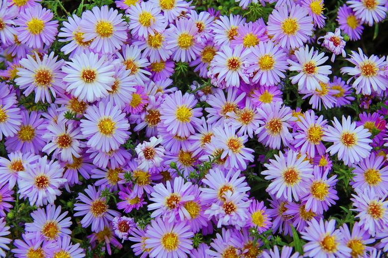 цветы картинки смотреть